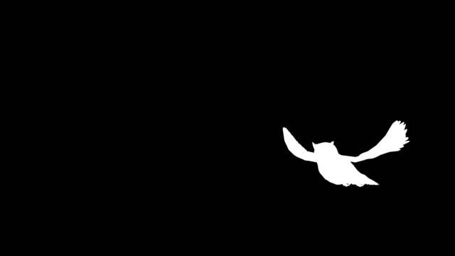 フクロウ離陸シルエット - カットアウト点の映像素材/bロール