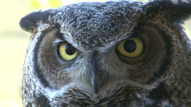 owl - animal eye stock videos and b-roll footage