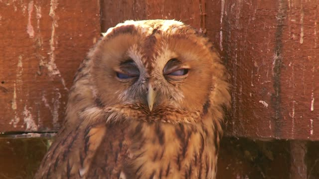 owl - animal mouth stock videos & royalty-free footage