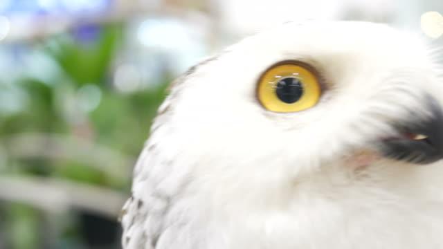 owl's eye - animal eye stock videos & royalty-free footage