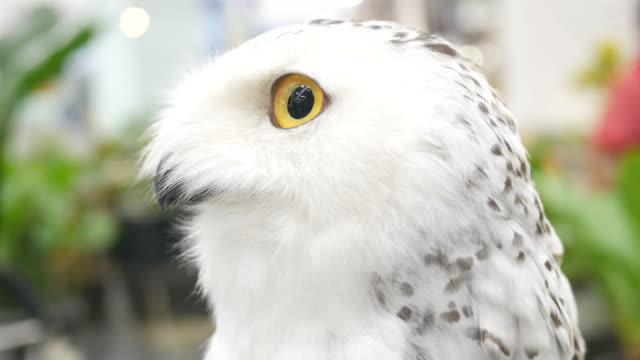 owl's eye - testa video stock e b–roll