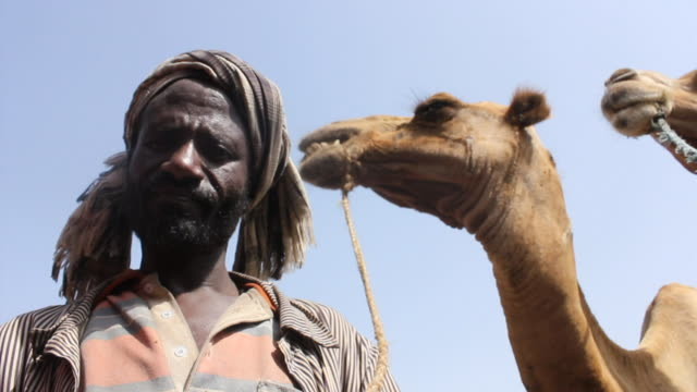 owner and camel at camel fair - ethiopia stock videos and b-roll footage