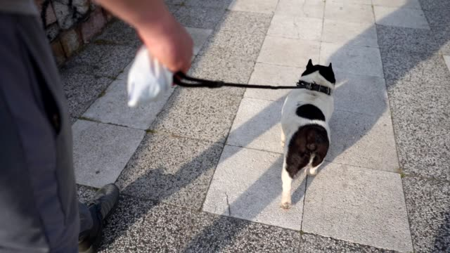 owner taking his dog for a walk with poop bag - lead stock videos & royalty-free footage