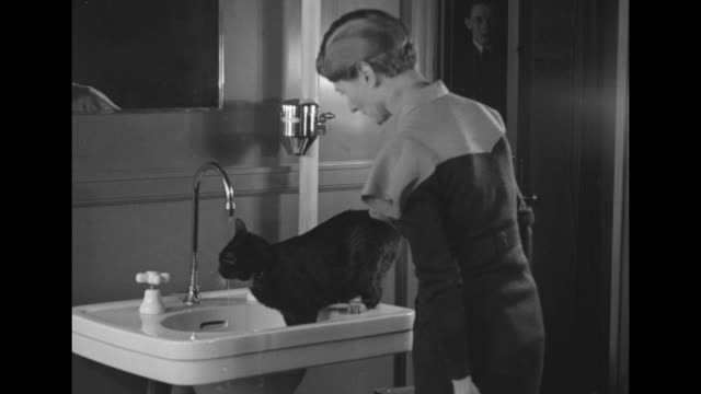 owner washing her cat in sink / two shots of cat drinking from faucet / owner washing her cat in sink / note exact day not known - pet owner stock videos & royalty-free footage