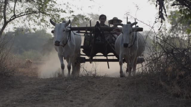 ox and cart transporting local women through rural burma - dirt track stock videos & royalty-free footage