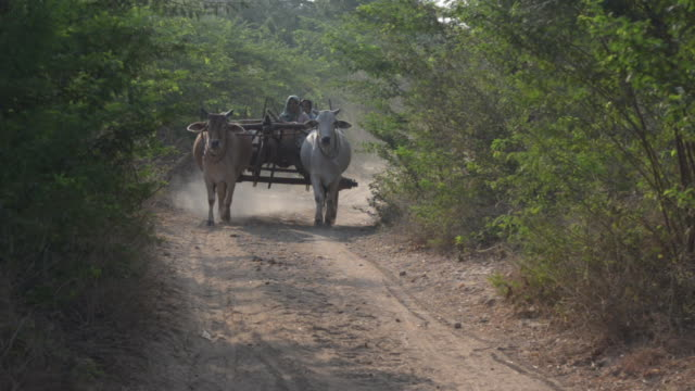 ox and cart transporting local women through rural burma - ox cart stock videos & royalty-free footage
