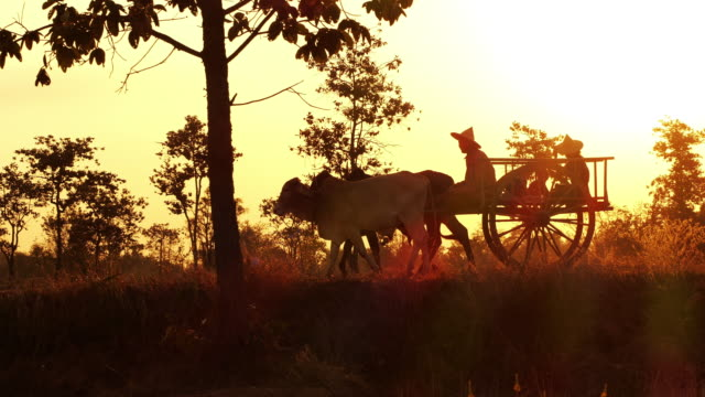 stockvideo's en b-roll-footage met ox cart bij zonsondergang in thailand - paardenkar