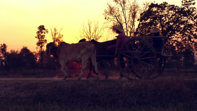 ox cart at sunset - ox cart stock videos & royalty-free footage
