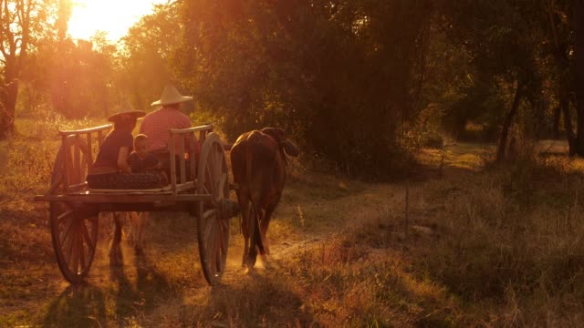 ox cart at sunset - cambodia stock videos and b-roll footage