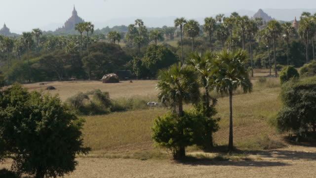 ox cart passing in bagan, myanmar - ox cart stock videos & royalty-free footage