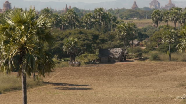 ox cart starts at farmers house in bagan, myanmar - ox cart stock videos & royalty-free footage