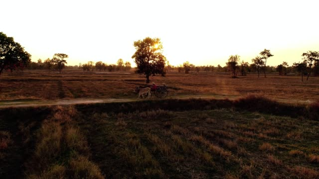 ox cart travelling at sunset - ox cart stock videos & royalty-free footage