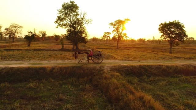 ox cart travelling at sunset - cart stock videos & royalty-free footage
