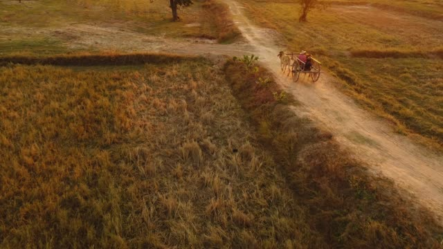 ox cart travelling - cocchio video stock e b–roll