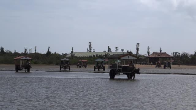 ox carts carrying tourists in taketomi island, okinawa, japan - cattle点の映像素材/bロール