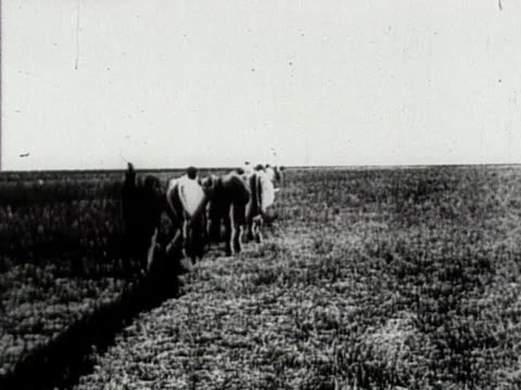 ox drawn plow making furrow across steppe in crimea - plowed field stock videos & royalty-free footage