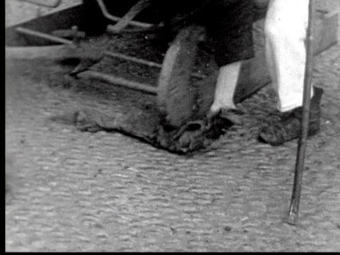 ox drawn sleds going down street man passes greased rag under runners / funchal madeira - anno 1925 video stock e b–roll