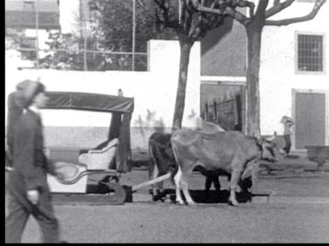 ox drawn sleds used for tourists. couple climbs in. from sled / funchal, madeira - anno 1925 video stock e b–roll