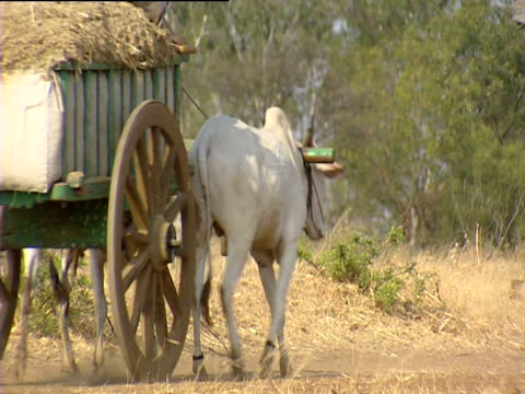 ox pulling cart piled with hay india - ox cart stock videos & royalty-free footage
