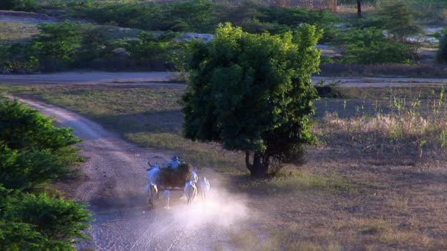 vidéos et rushes de oxcart moving in myanmar - animaux au travail
