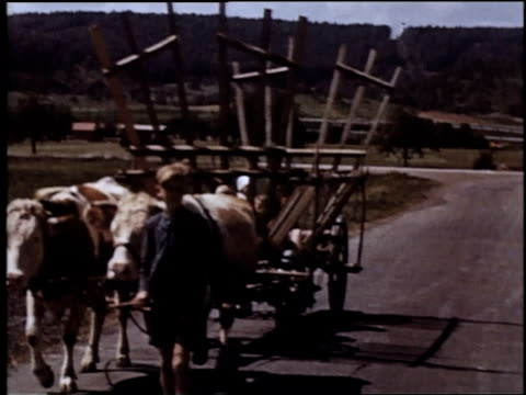 ws oxen pulling cart down road led by small boy / germany - 1945 stock-videos und b-roll-filmmaterial