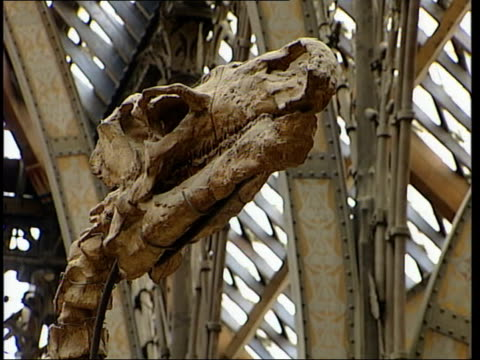 oxford: side woman taking photograph statue int wallinger looking up at dinosaurs skeleton of dinosaur display case bv wallinger along to stand next... - galileo galilei stock videos & royalty-free footage