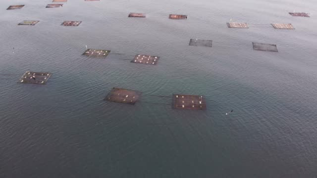 oyster aquaculture floating farms - south china sea stock videos & royalty-free footage