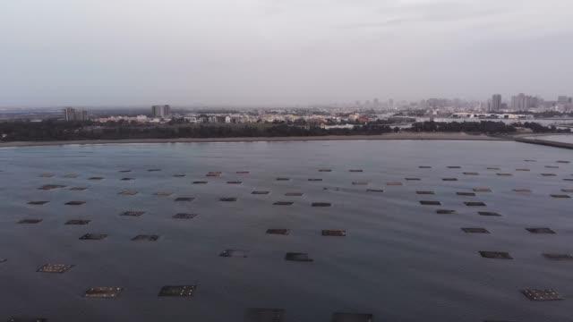 vídeos de stock, filmes e b-roll de fazendas de flutuante de aquicultura de ostra - bay of water