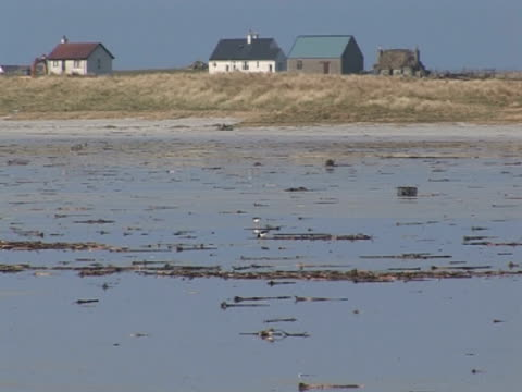 Oyster Catchers , walking on beach, exploration, togetherness, idyllic