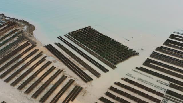 vidéos et rushes de oyster farm filmed from a panning drone shot, fouras, france - eco tourism