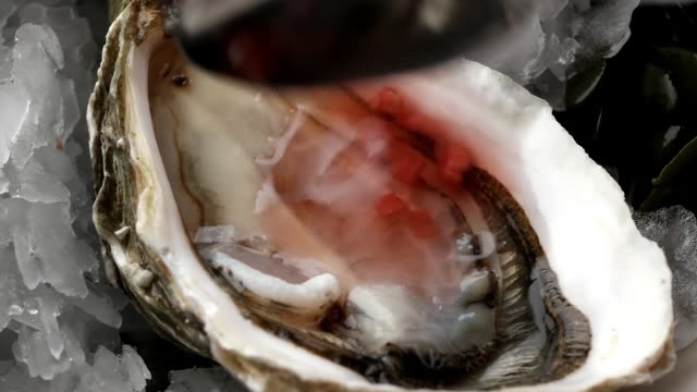 oyster montage - seafood stock videos & royalty-free footage