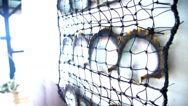 oyster net pearl farming industry in tahaa tahiti - isola di tahaa video stock e b–roll