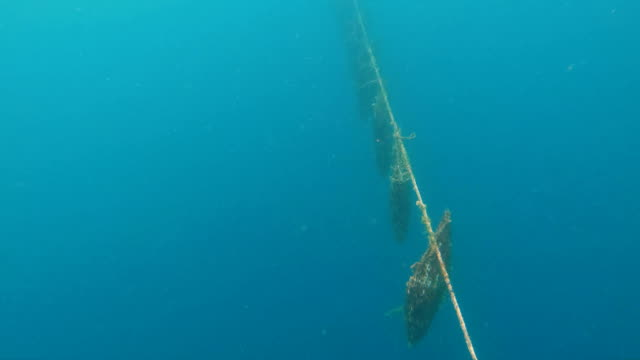 vídeos de stock, filmes e b-roll de oyster traps hanging to cultivate pearl growth tahiti - ilha tahaa