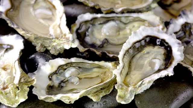 oyster - seafood stock videos & royalty-free footage