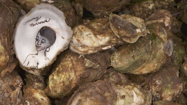 oyster - figura femminile video stock e b–roll