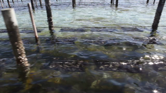 oysters farm - oyster shell stock videos & royalty-free footage