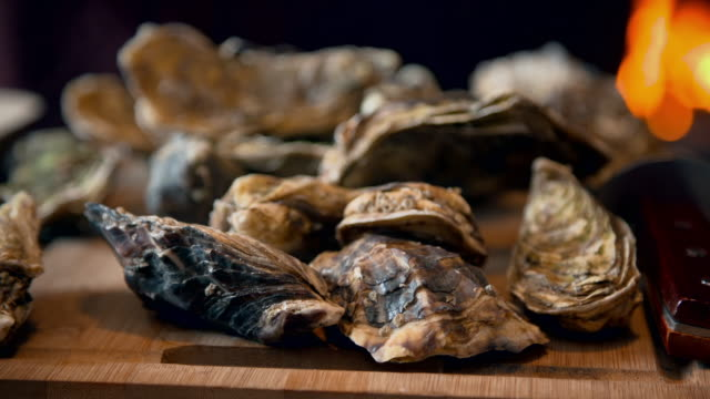 oysters in a rustic kitchen - mollusc stock videos & royalty-free footage