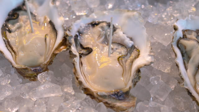 4k oysters on ice - oyster shell stock videos & royalty-free footage