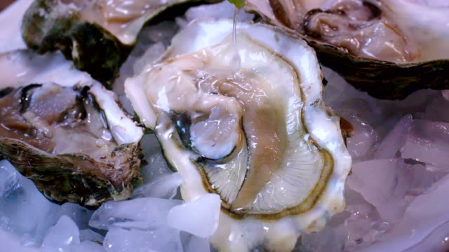 oysters on plate with ice and lemon - seafood stock videos & royalty-free footage