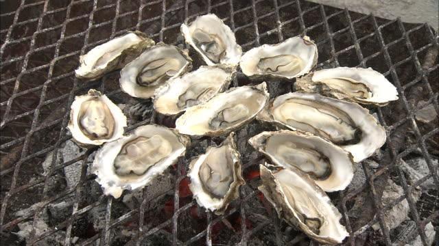 Oysters sizzle in their shells as they grill on a charcoal fire.