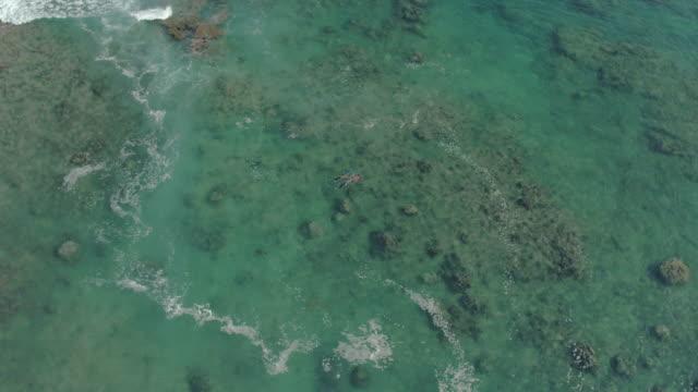 pacific islander man and woman snorkeling over reef in ocean bay - pacific islander stock videos & royalty-free footage