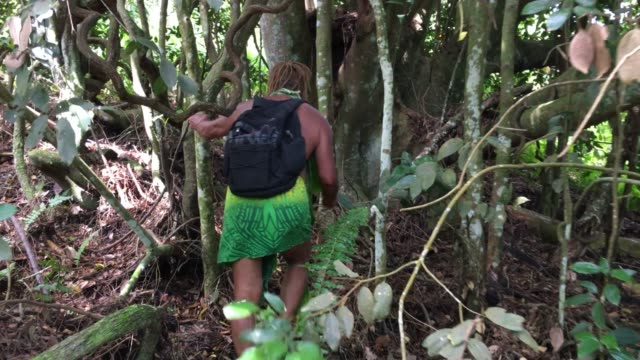 pacific islander mature man ecotourism tour guide walks in rain forest - pacific islander stock videos & royalty-free footage