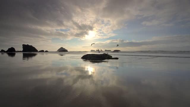 vidéos et rushes de pacific ocean beach with sea gulls - littoral