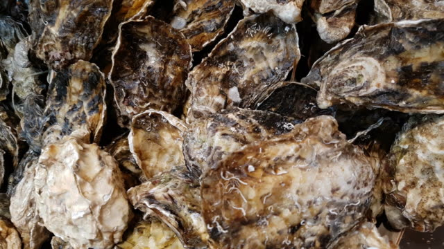 pacific oysters on fish market display - crustacean stock videos & royalty-free footage