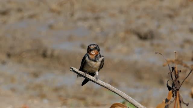 Pazifik schluckt Vogel in der Natur.