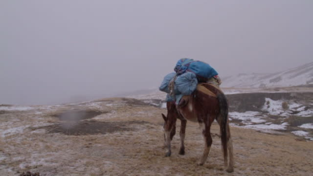 pack horse in the snow wide - carrying stock videos & royalty-free footage