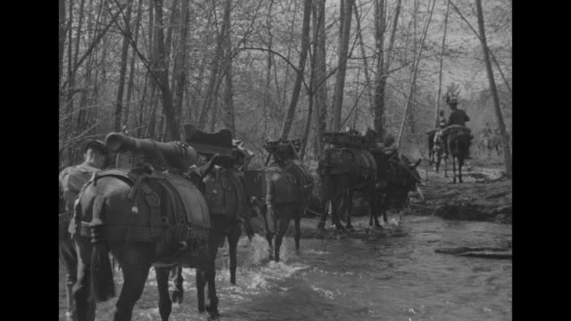 vs pack mules carry artillery pieces up hill across stream on mountain trail / us soldiers from fort lewis unload artillery piece from mule's back... - maultier stock-videos und b-roll-filmmaterial