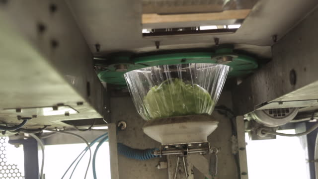 packaging machine wraps lettuces in plastic, uk - lettuce stock videos & royalty-free footage