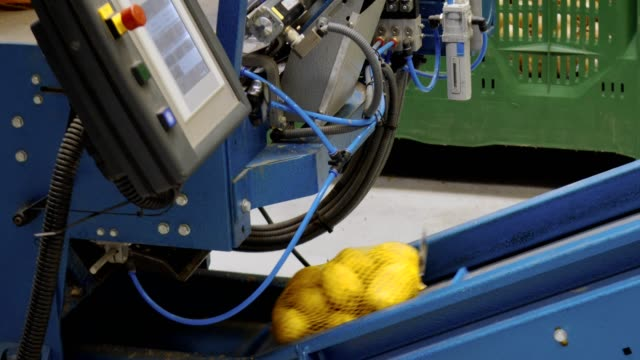 packaging of potatoes on a production line in a vegetable wholesale - packaging stock videos & royalty-free footage