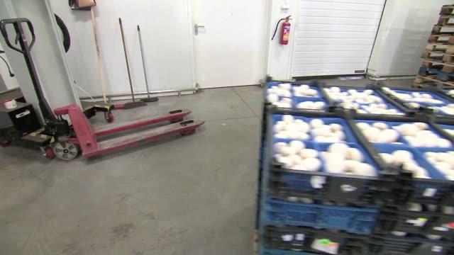 vídeos y material grabado en eventos de stock de packed champignons in crates - paleta herramientas industriales